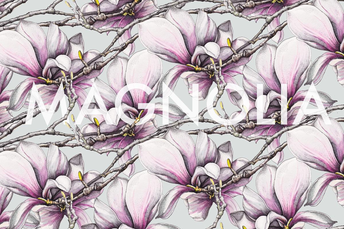 Magnolia 1 text.jpg