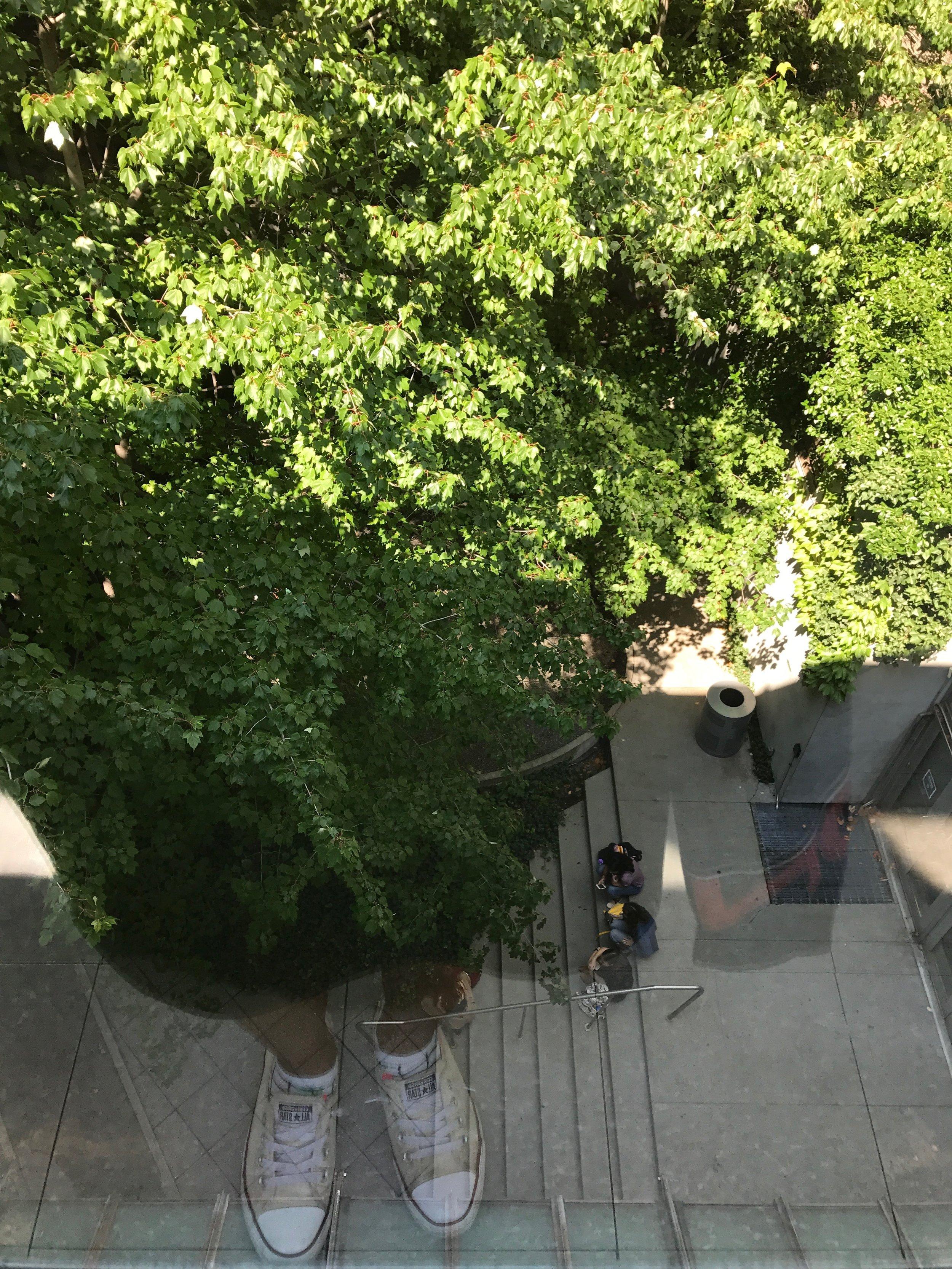 Original Tree People