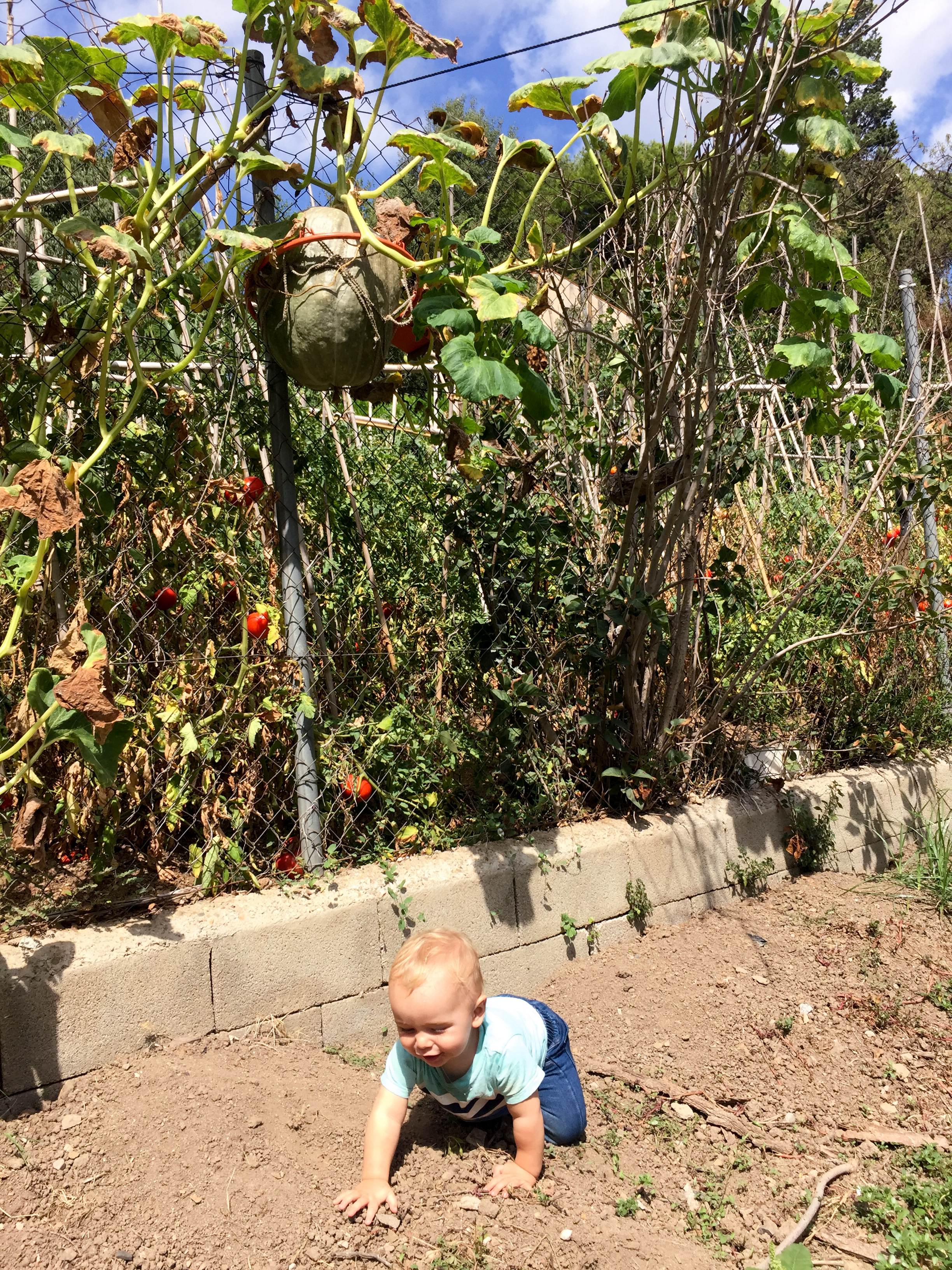 Life moves forward: Asher takes a stroll through our church's vegetable garden. And, yes, that's a watermelon growing in a basketball hoop.