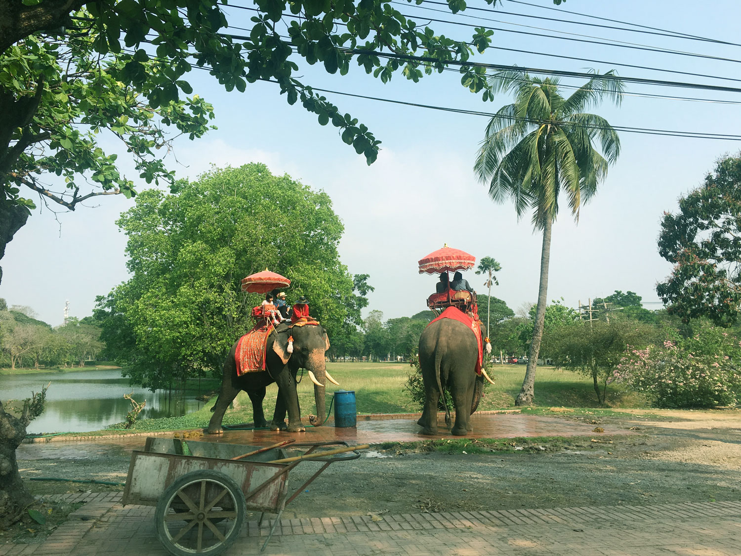 Do not Ride the trained Elephants or support Elephant Tourism in Thailand