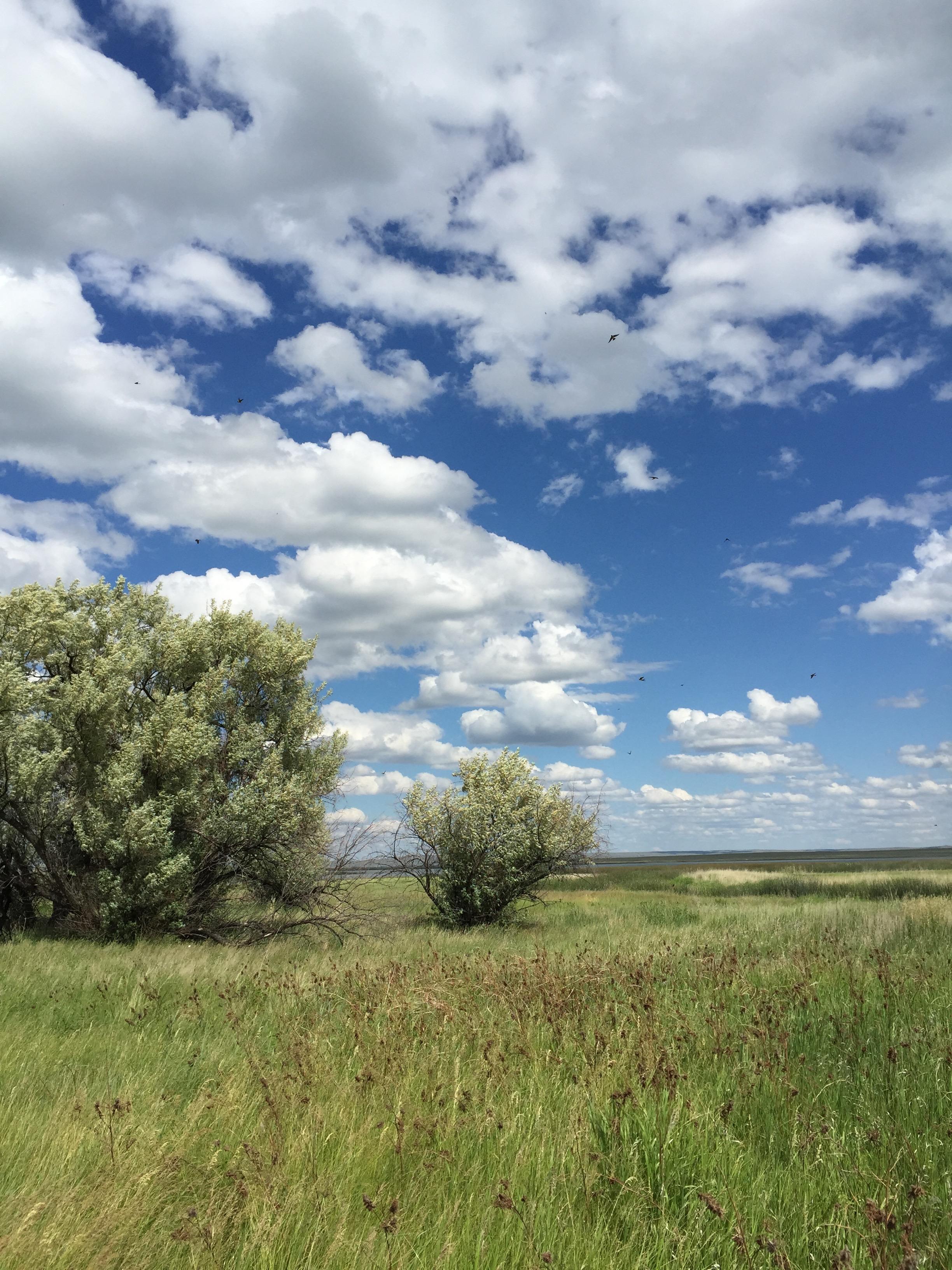 Prairie vista in North Dakota. (2015)