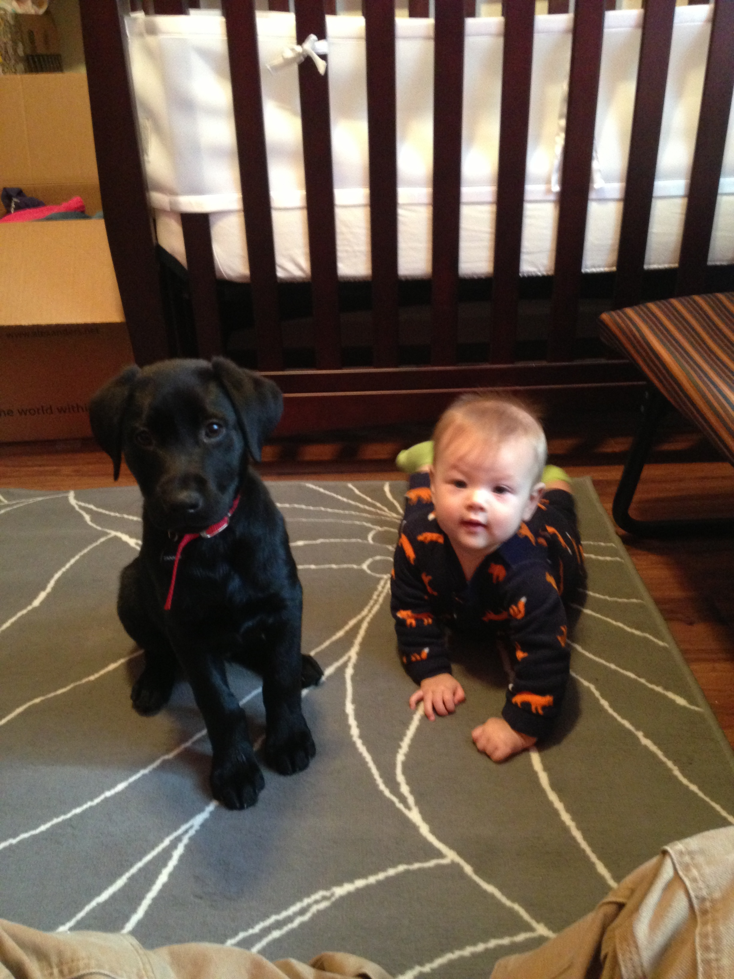 Tanker and my Daughter Reli, her at a little over a year and him at probably 18 weeks.