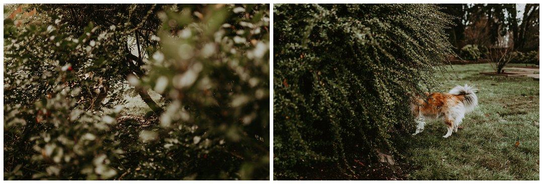 Orting_Washington_Natural_Light_Photographer_Brittingham_Photography_Gardening_Seniors_Couples_Newborns (6).jpg