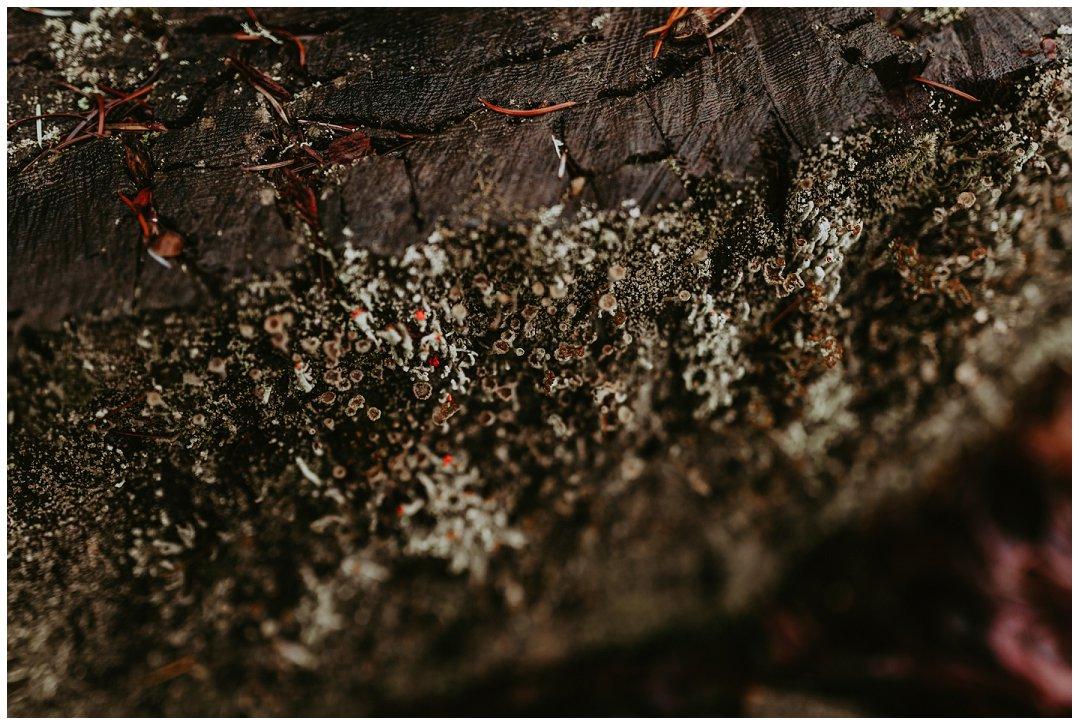 Orting_Washington_Natural_Light_Photographer_Brittingham_Photography_Gardening_Seniors_Couples_Newborns (10).jpg
