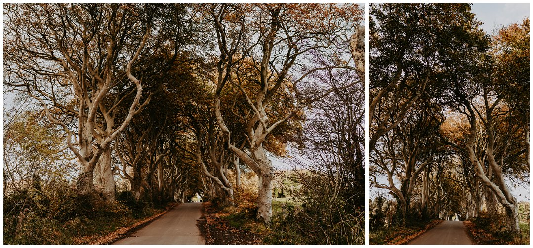 Brittingham_Photography_Seattle_to_Ireland_Roadtrip_Dunluce_Castle_Bushmills_Dark_Hedges_0002.jpg