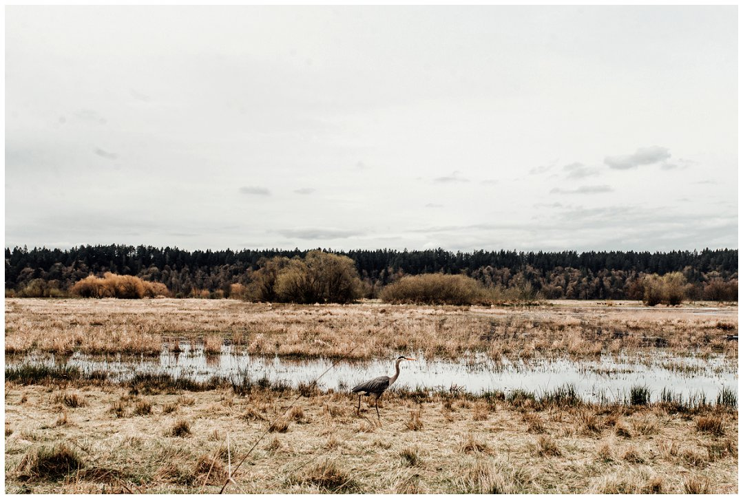 Brittingham_Photography_Orting_Natural_Light_Photographer_Nisqually_Wildlife_Preserve_Olympia_0040.jpg