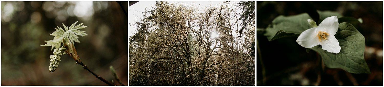 brittingham_photography_orting_washington_photographer_mount_rainier_senior_photos_0273.jpg