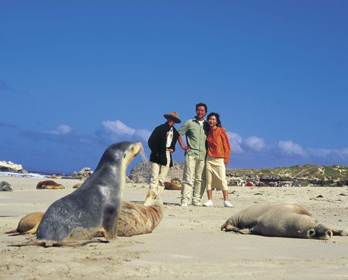 Get up close to Australian sea lions at Seal Bay