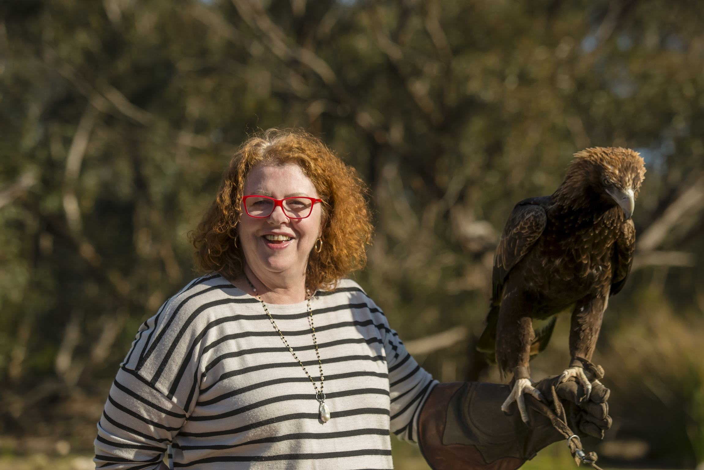 See the Birds of Prey at Raptor Domain