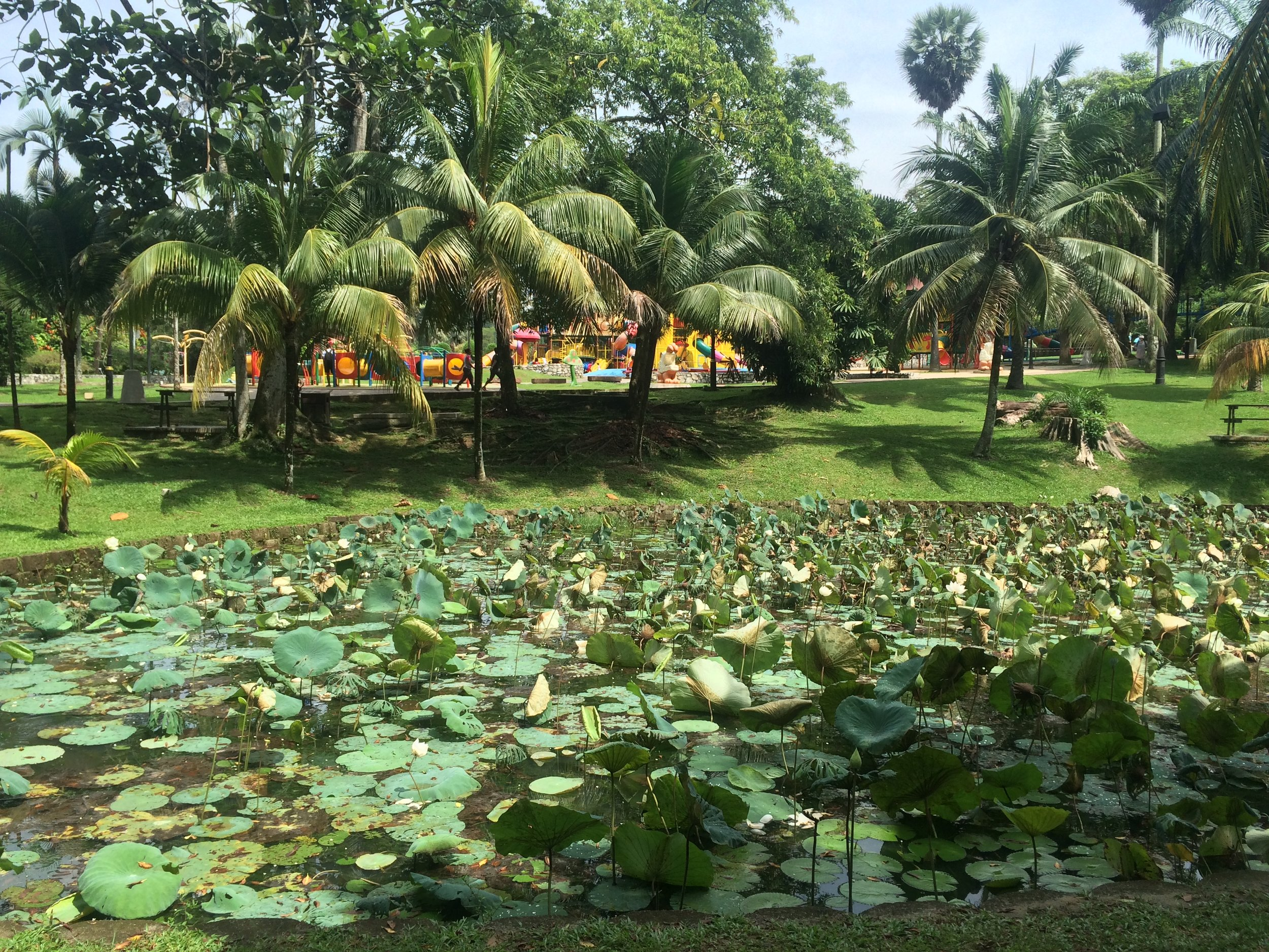 The White Lotus Pond, Perdana Botanical Gardens, Kuala Lumpur (Note the Children's playground in the background)