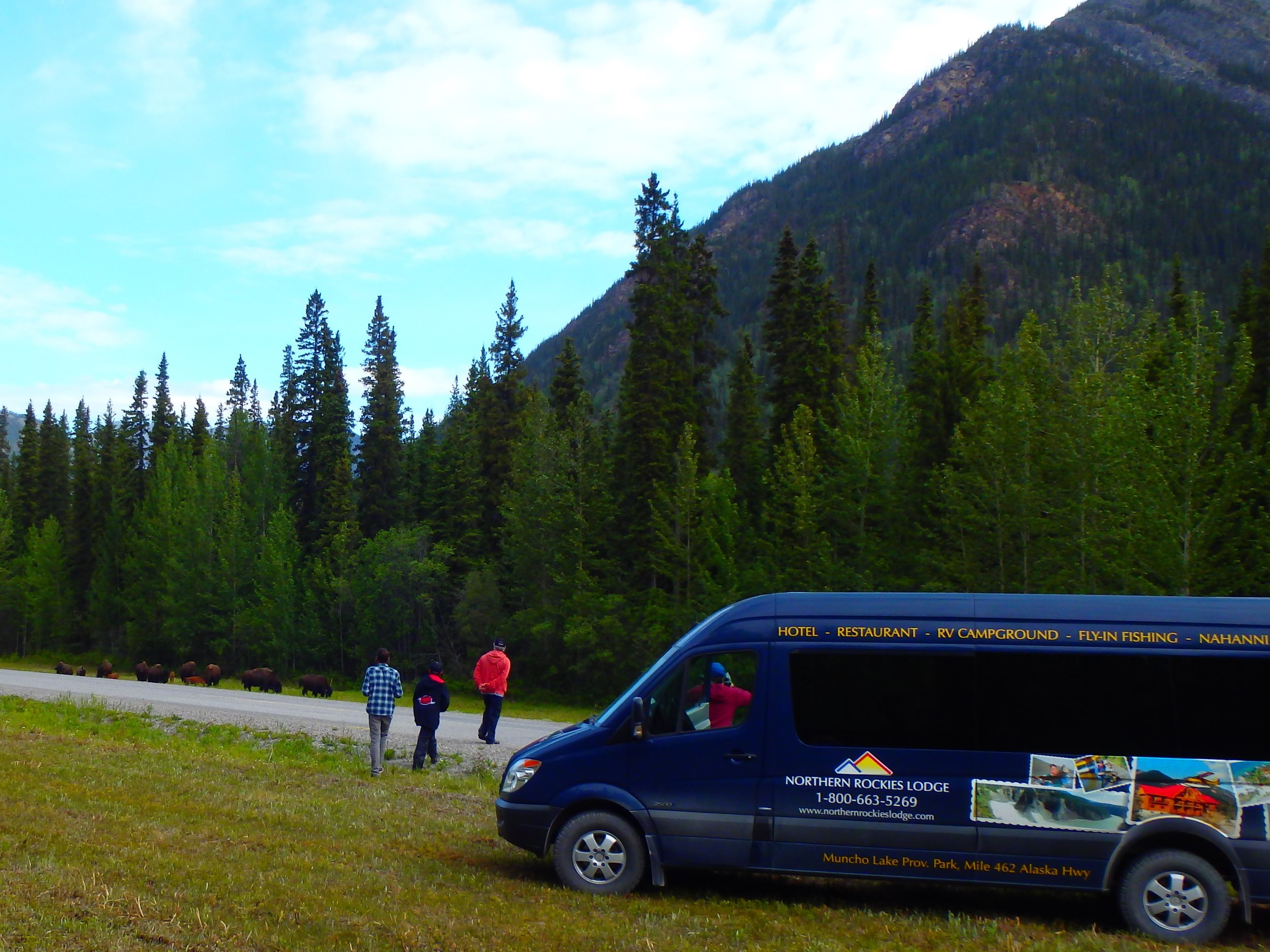 Mercedes Sprinter just outside the Liard River Hotsprings, guests viewing wild wood bison