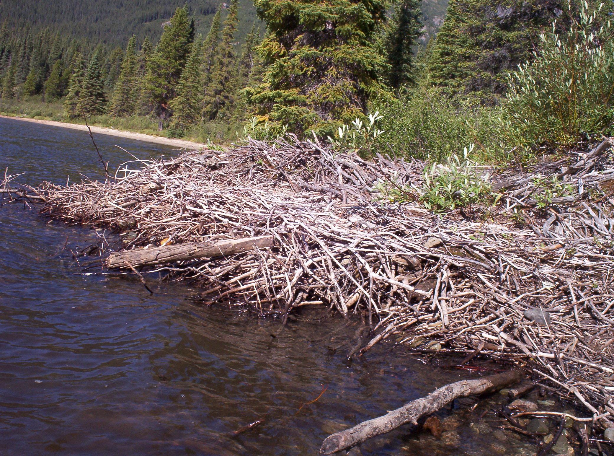 Copy of Beaver dam, Denetiah Provincial Park
