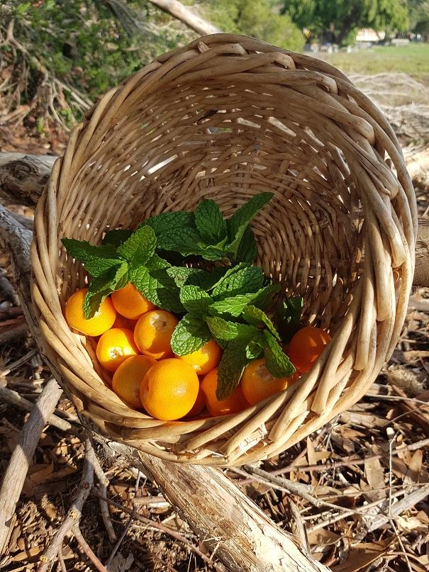 small cumquats.jpg
