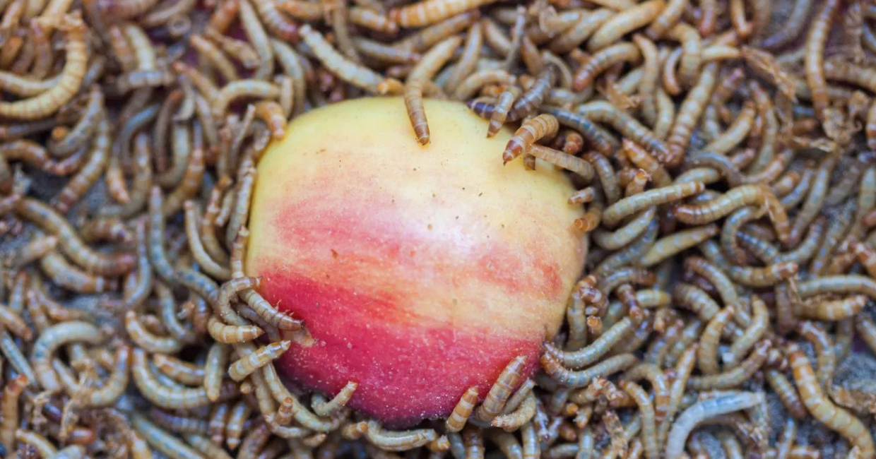 Wilbur-Ellis Backed Insect Startup Beta Hatch Closes $2.1M Seed Round - AgFunder NewsApril 2018