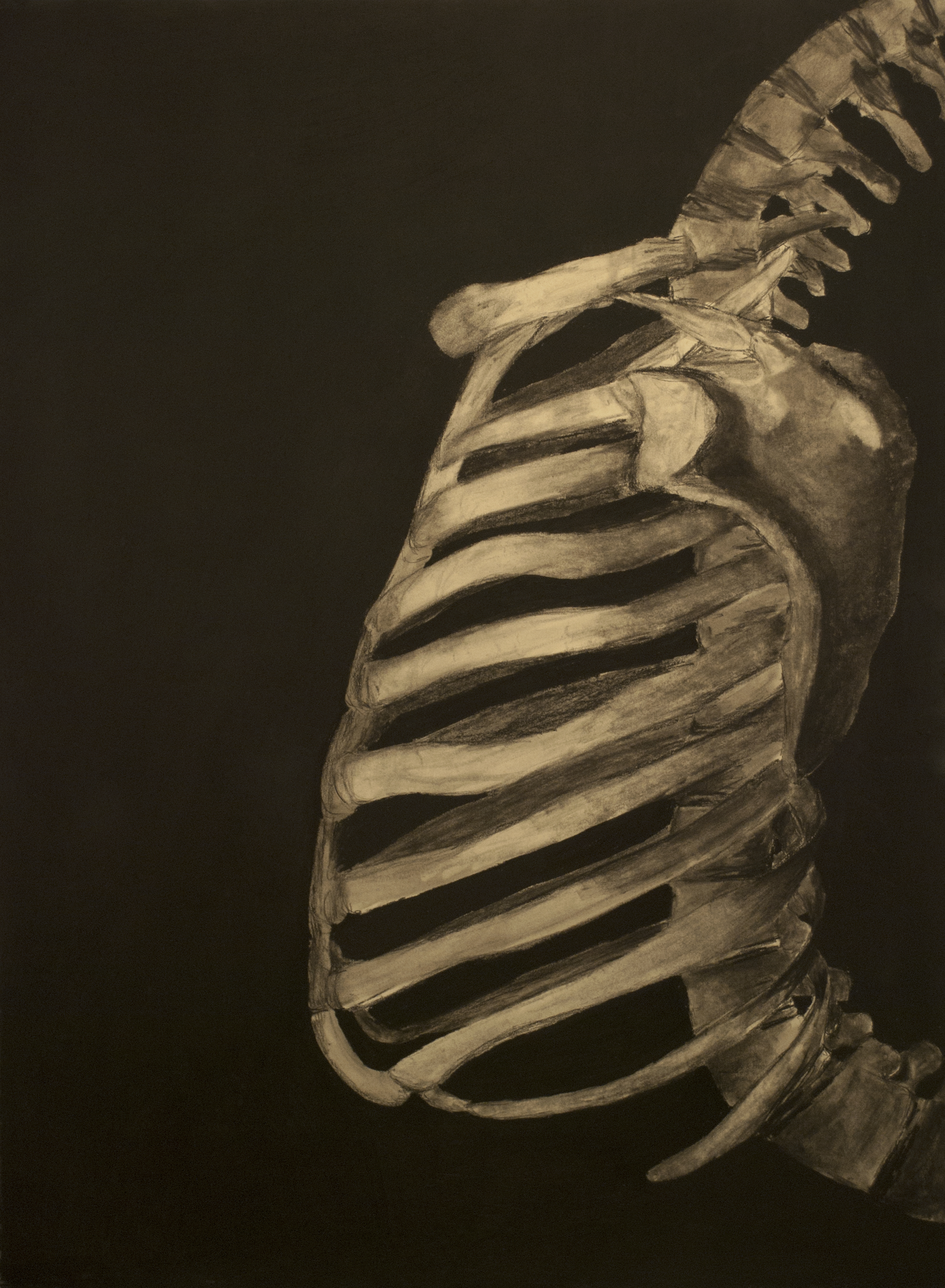 """Crunch (a ribcage study)"""