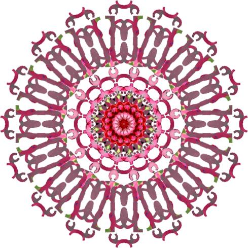 oc-pink-1.jpg