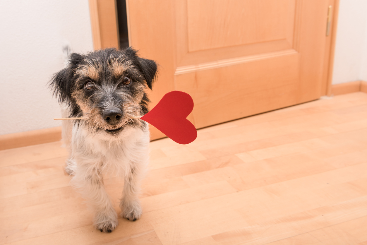 "Half of us will ditch our date and spend our hard-earned cash on our beloved pets   this Valentine's Day according to research released today.  A study of UK pet owners* commissioned by Natures Menu, has revealed that almost half of us (47%) will buy our pet a gift this Valentine's Day, and one in three of us (37%) admit we'll be spending the special day with a furry friend and not a significant other.  However, for those of us in a relationship, 14% actually admit to loving our pets even more than our other half!  We're not afraid of pushing the boat out either with £210million estimated to be spent on our beloved pets this February.** 44% of us will spend between £10-£30 with 4% admitting to really splashing out, spending over £30 per pet.  Outside of London (57%), Birmingham comes out top as the city which will treat its pets the most this Valentine's Day (54%), followed by Glasgow (50%) and Edinburgh (47%).  And what about dogs vs. cats? We're a 'puppy love' nation according to the data, with a quarter of us (25%) admitting our pups will receive a special gift. Cats still fare well though with 19% of us admitting to treating our kitty.  The top five treats for pets this Valentine's Day:  1.    A favourite treat - 35%  2.    A toy to play with - 30%  3.    A new bowl - 9%  4.    A slap-up dinner - 7%  5.    A cute outfit - 4%  Claire Miller, Head Vet at experts in raw and natural pet food, Natures Menu, said: ""It's great to see that we really are a nation of animal lovers! Part of lovingly caring for our pets should be ensuring they are fed the right food, so if treats are your gift of choice, make sure they're high in nutritional value and balanced with plenty of exercise to maintain a healthy lifestyle."""