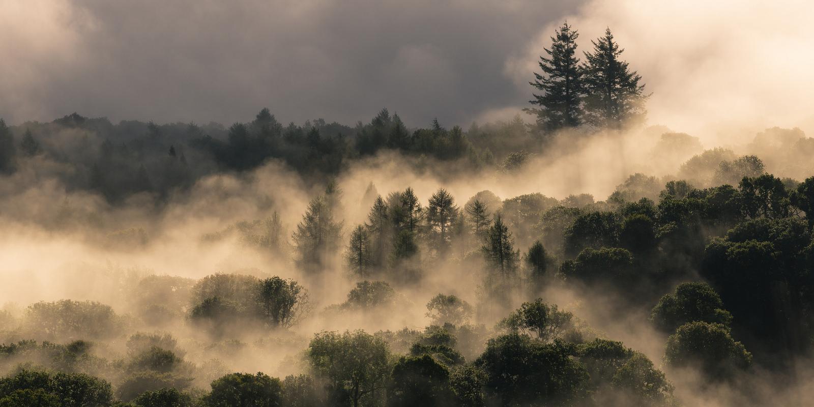 Golden light accentuating the Autumn Mist