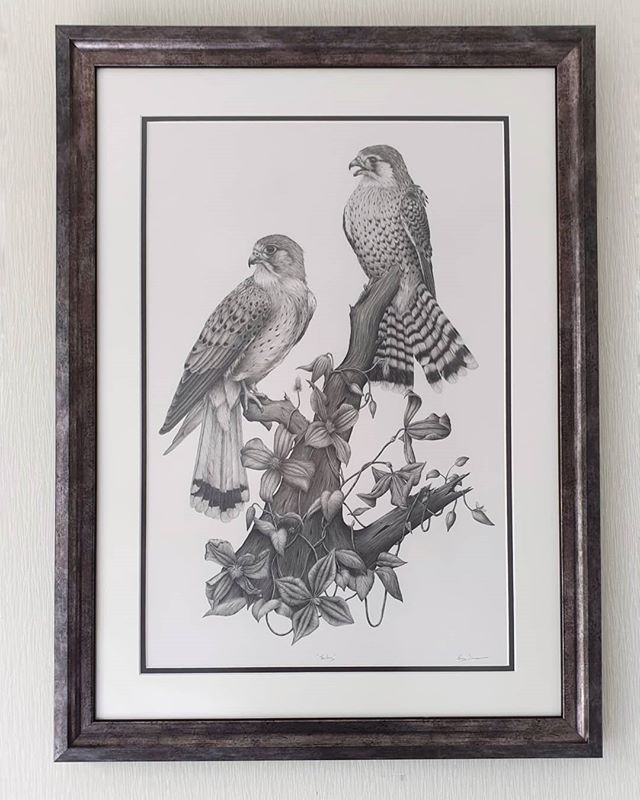 These 2 Kestrels sitting pretty all framed up ❤  I try to sneak insects into most of my drawings because I love them and they're important! There's 4 in this piece 🕷🐞👀 . . . . . . #bird #birdart #birdnerd #kestrel #birdofprey #falconry #birdstagram #igbirds #feather_perfection #sharingart #thenativecreative #creativebusiness #hearstothecreatives #handsandhustle #smallbizlife #artbiz #pencilart #fortheloveofart #drawingoftheday #art #artwork #gallery #picturewall #drawing #onthewall #style #wallart #artfinder #artforthehome #originalart
