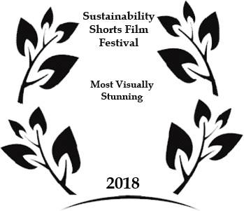 11th February, 2018  LOBSTER FILM WINS ITS SECOND AWARD  'A Gentle Giant' tied for a judges' choice award for Most Visually Stunning film in the Sustainability Shorts Film Festival - Illinois, USA.