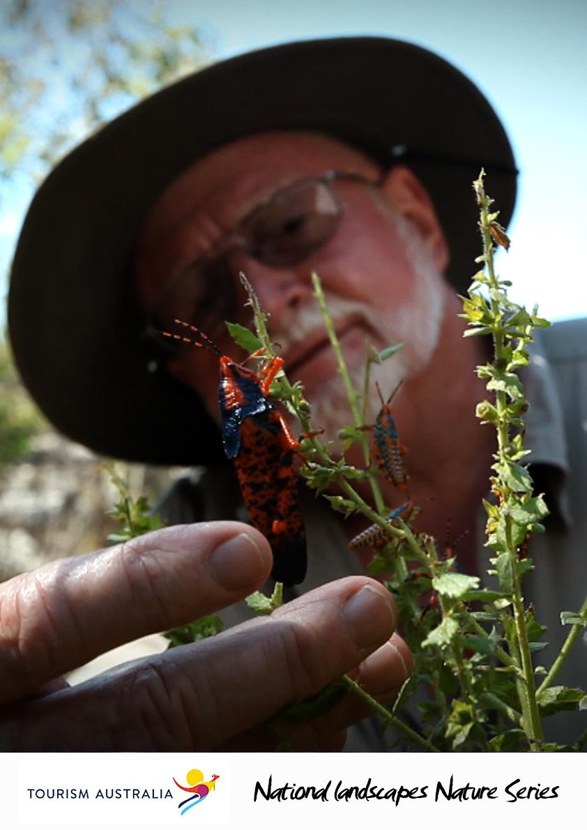 Tourism: Grasshopper