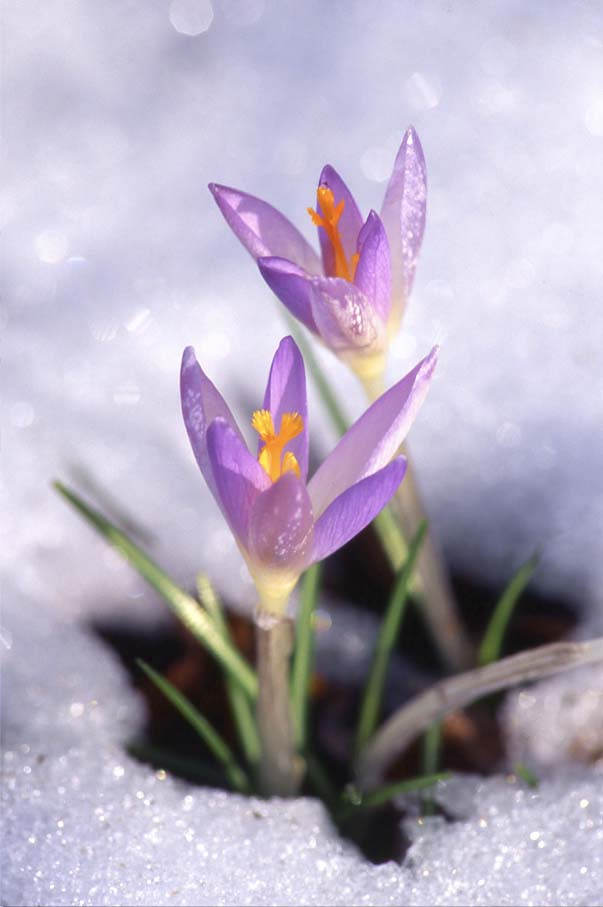 WinterSpring.jpg