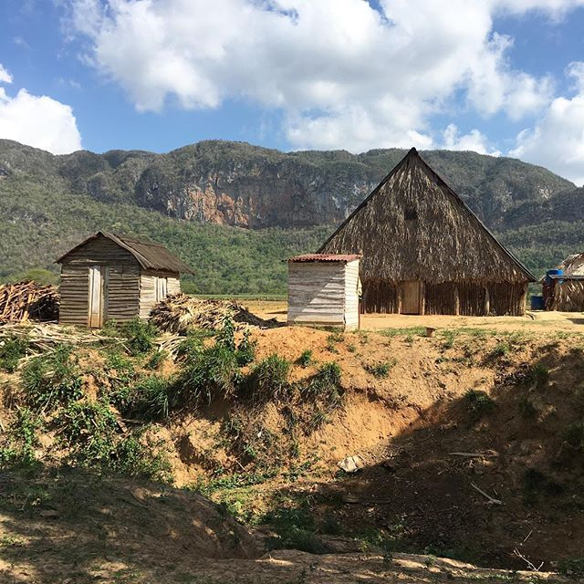 More Cuba spam. Home of tobacco. Yummy! Here's the tobacco hut we went in to learn how to make cigars (and smoke them dipped in honey - yum) #cuba #vinales #tobacco #cigars