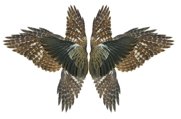 bird_rorscach.jpg