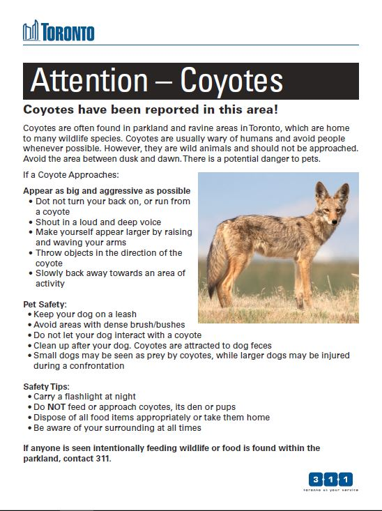 Coyote Educational Information    Coyote Information Package    Backgrounder Response Strategy    Coyotes 101    Coyote Biology and Behaviour