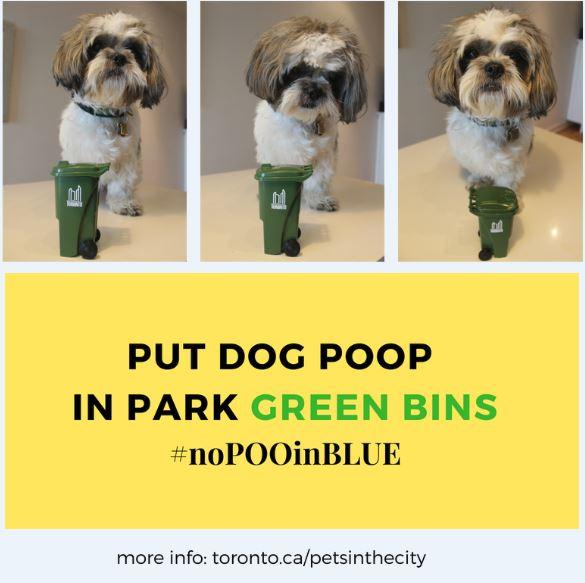 Dog Poop.JPG