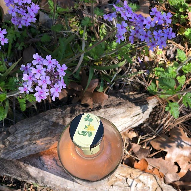 Our favorite Texas Wildflower amongst the spring blooms!  Share yours 🌺🌸🌼 #craftcocktails #drinklocal #drinkinthemoment #befree #wildflowers #shoplocal