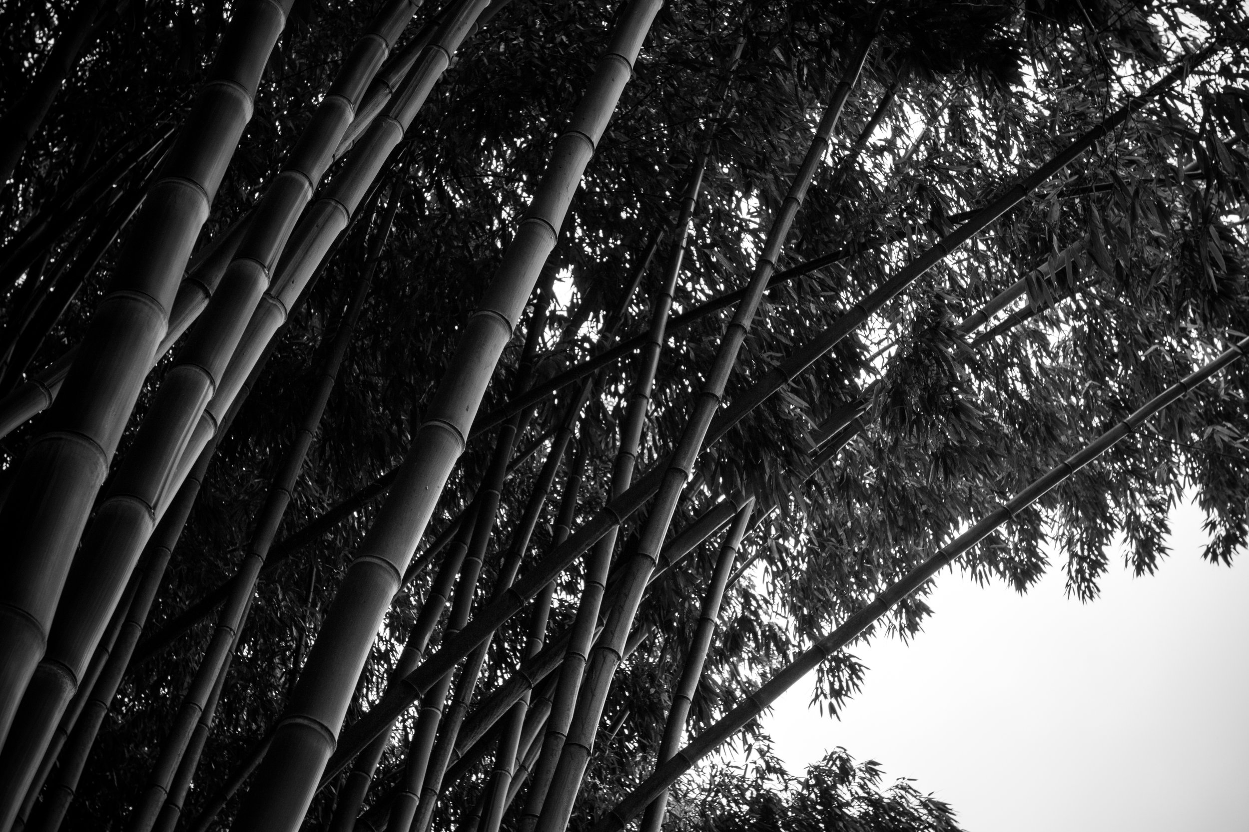 Cali blog edits-11.jpg