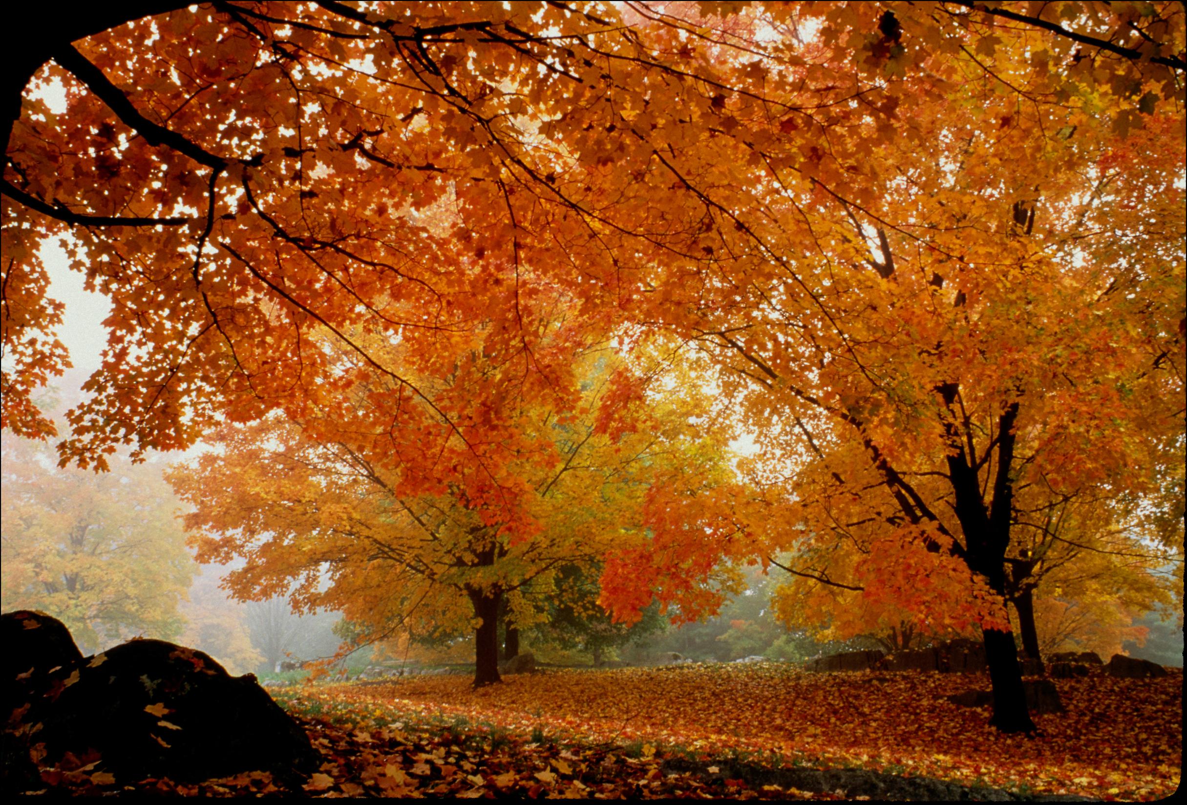 War Memorial Park in Fall Color