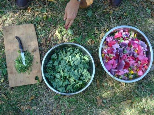 Récolte matinale pour une salade fraiche et fleurie