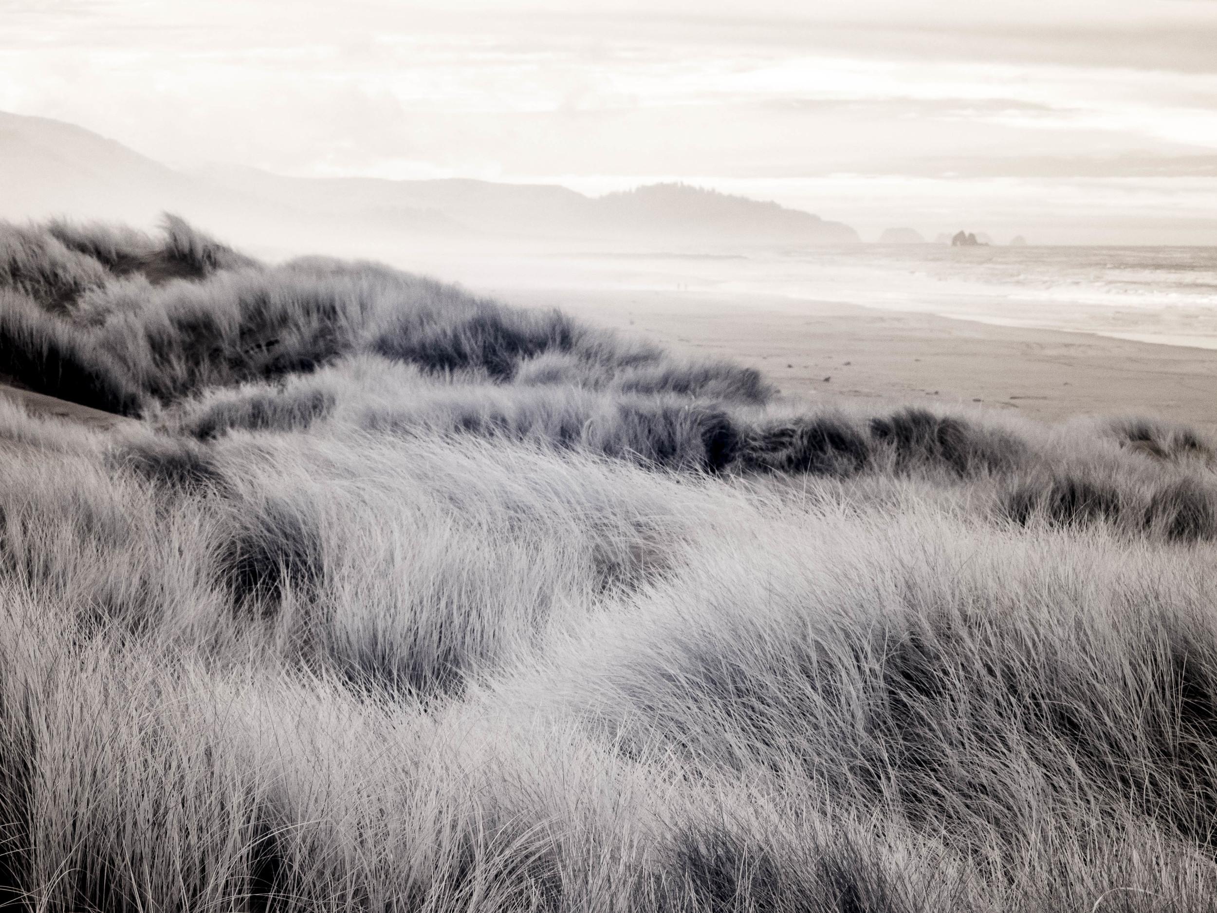 """""""Dune Grass"""""""