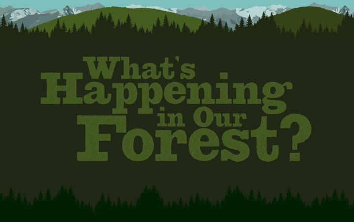 forest-health-index.jpg