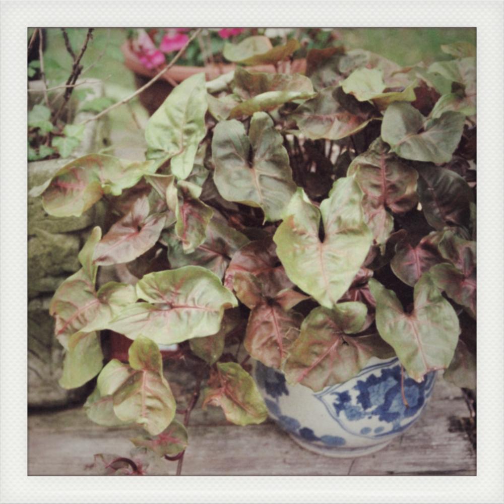 Plants & Vase