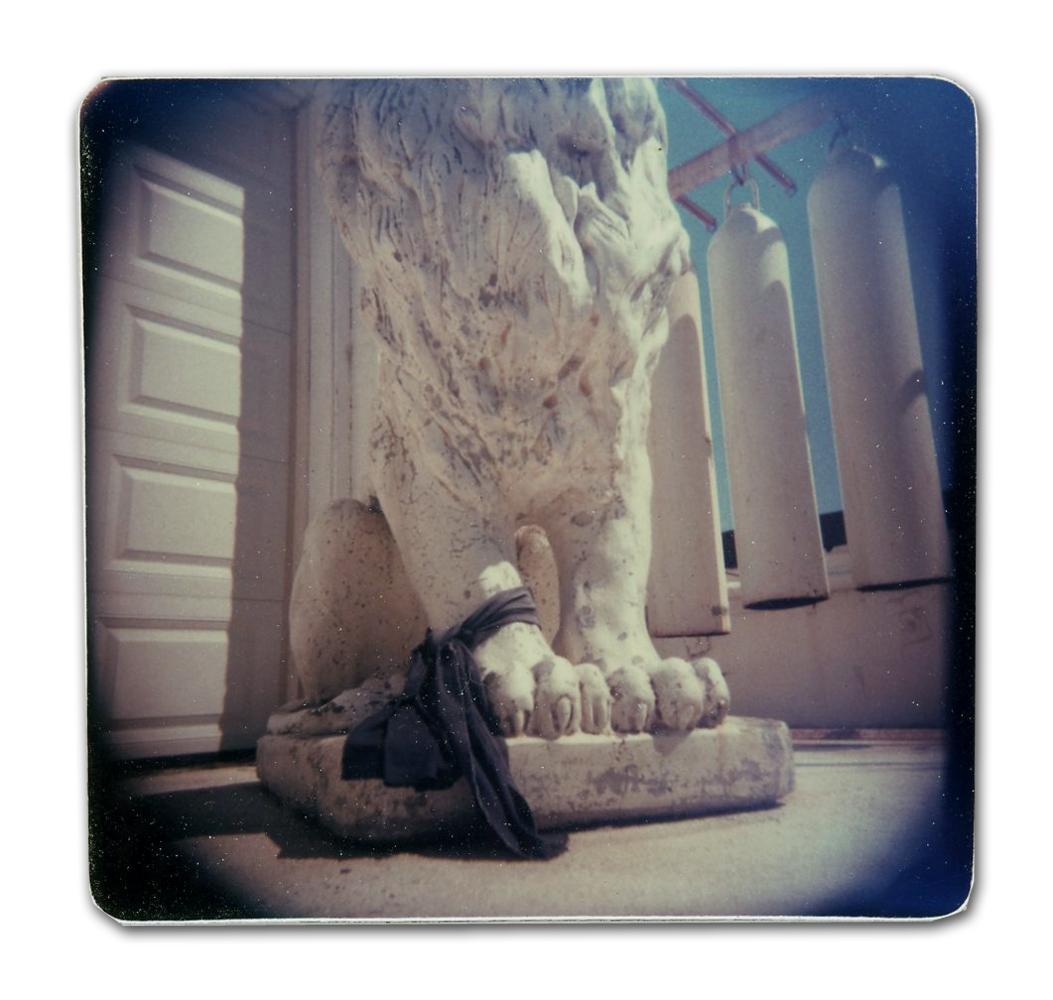 Lion (Unique polaroid print mounted on cardstock)
