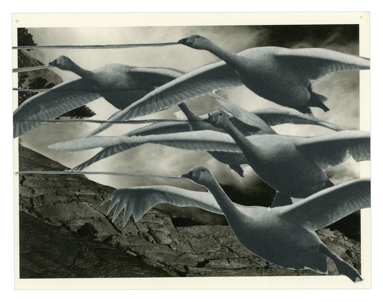 Geese Being Pulled Postcard, 2016