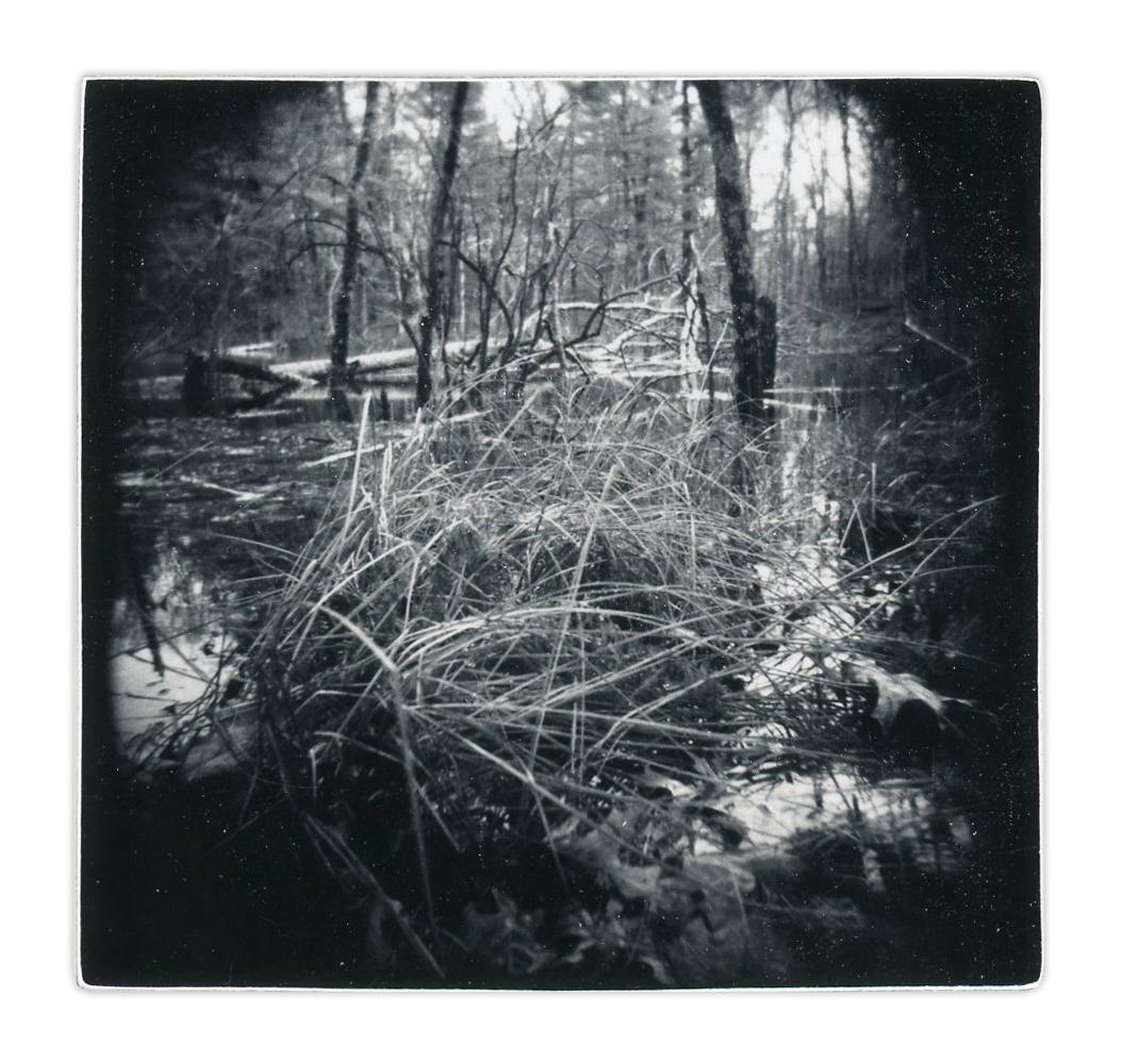 Marsh (Unique polaroid print mounted on cardstock)
