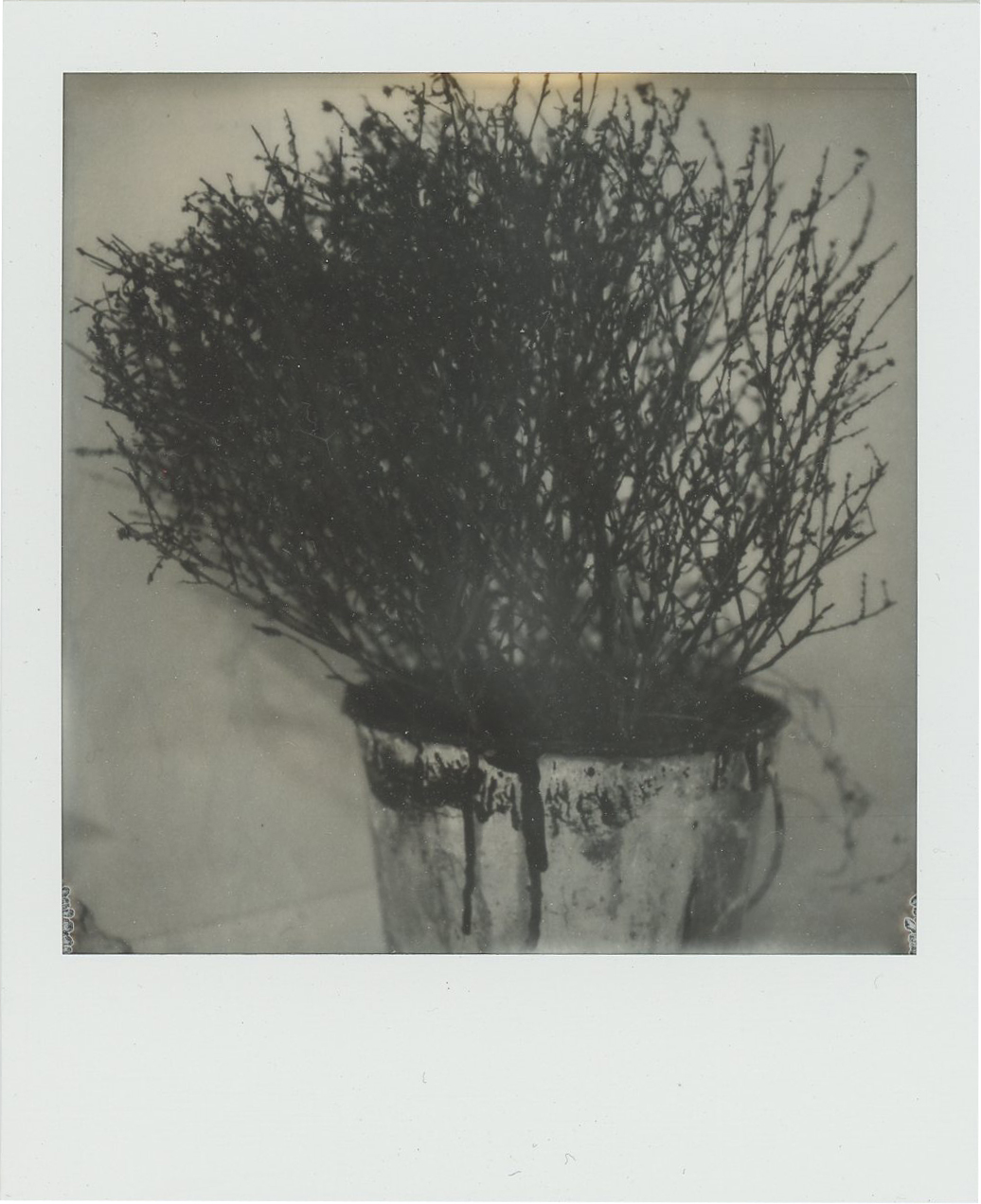 Bucket and Dead Plant, 2019