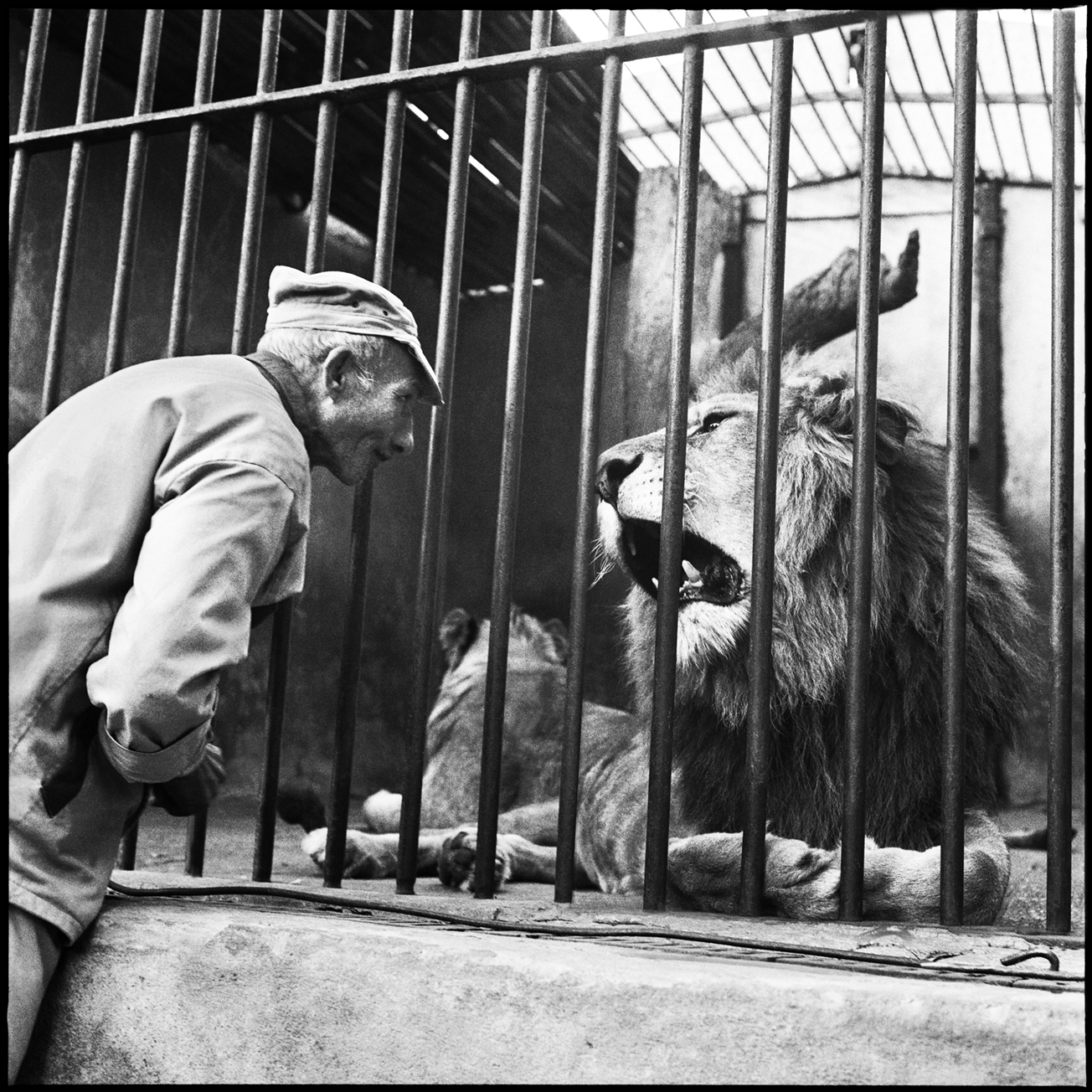 Zoo Le Caire-02.bis.jpg