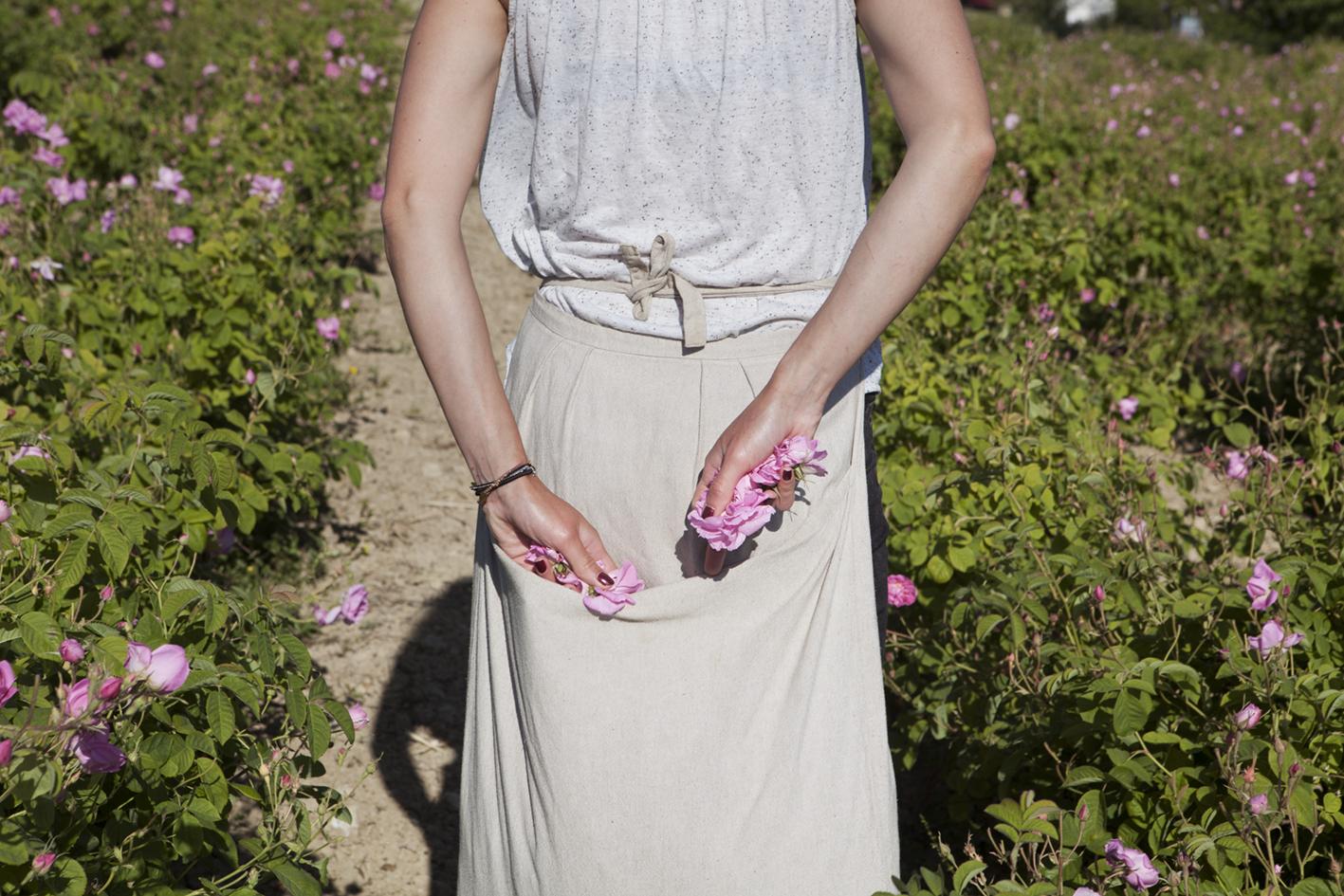 Dior Roses