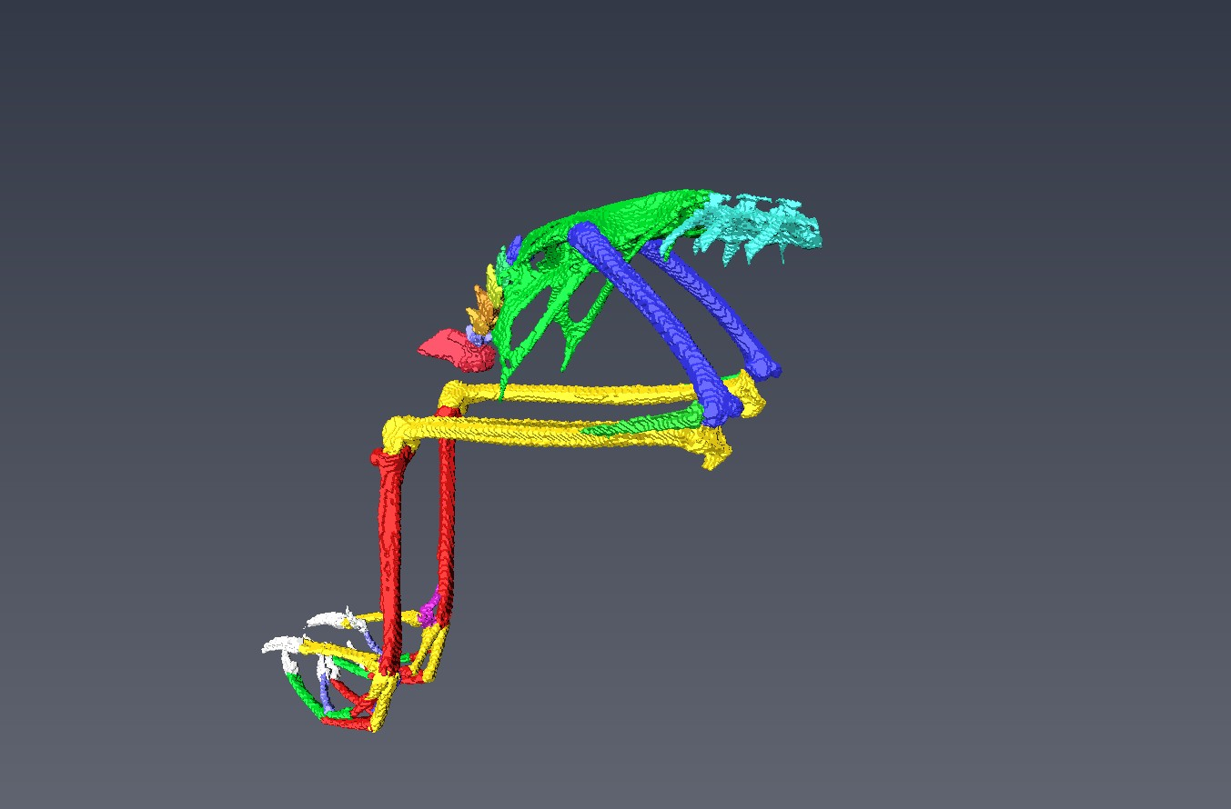 3D image of a pelvic girdle of the Domestic Sparrow, created by  Andrei Zinoviev.
