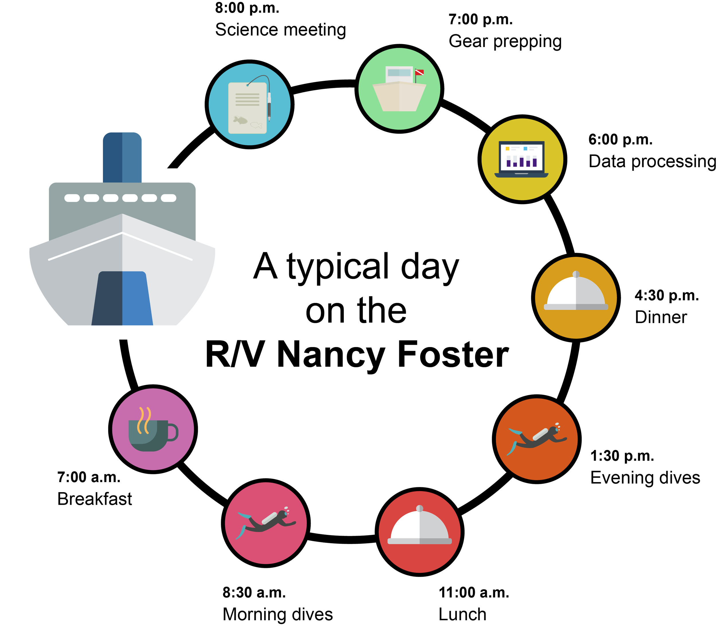 Graphic showing a typical day on the R/V Nancy Foster! Created by Martin Debord.