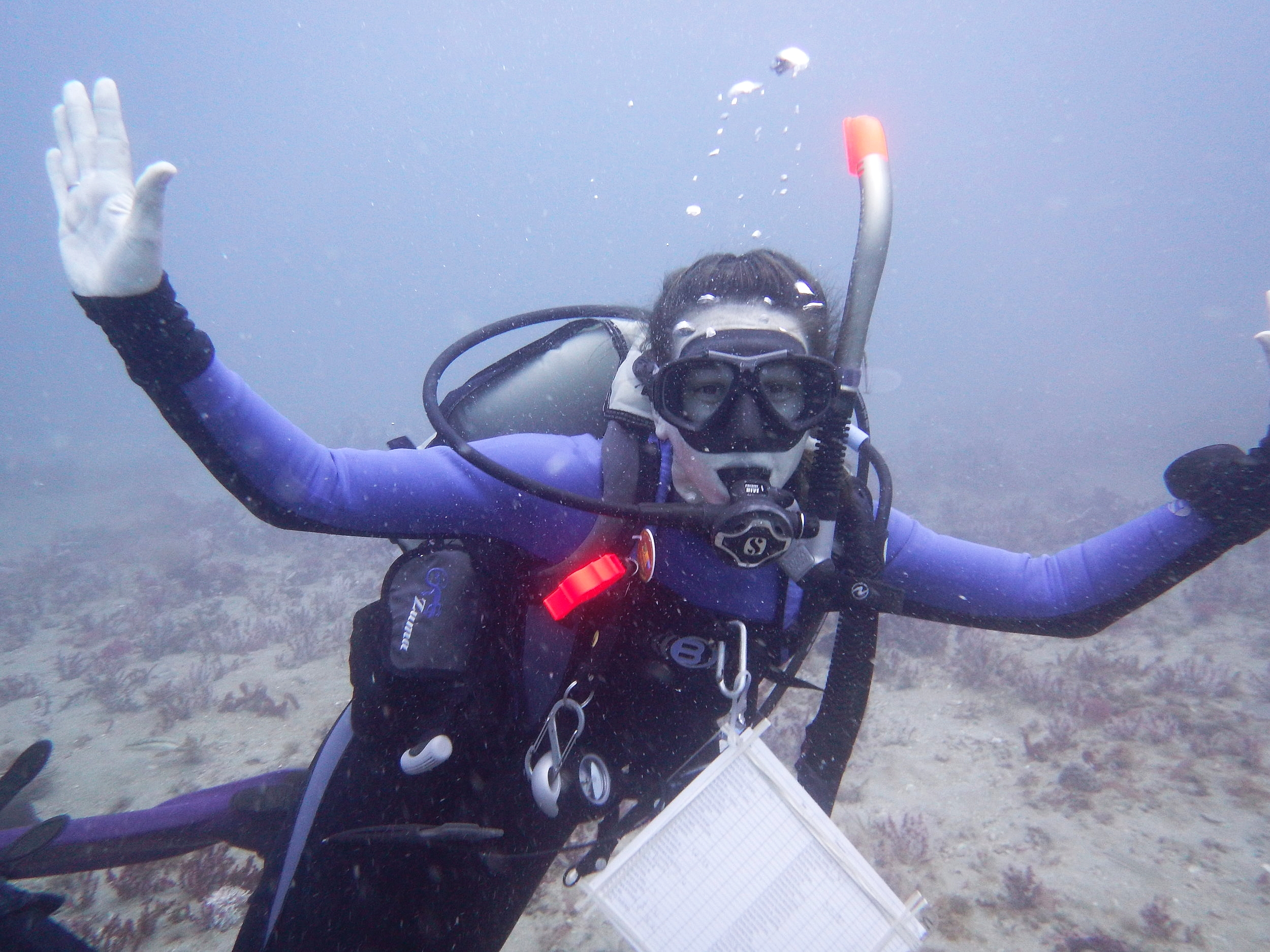 "Photo of Alicia scuba diving at Gray's Reef. ""Getting excited about being the first people to dive at this never-before-explored dive site found during the acoustic surveys."" - Alicia. Credit: Brianne Varnerin."