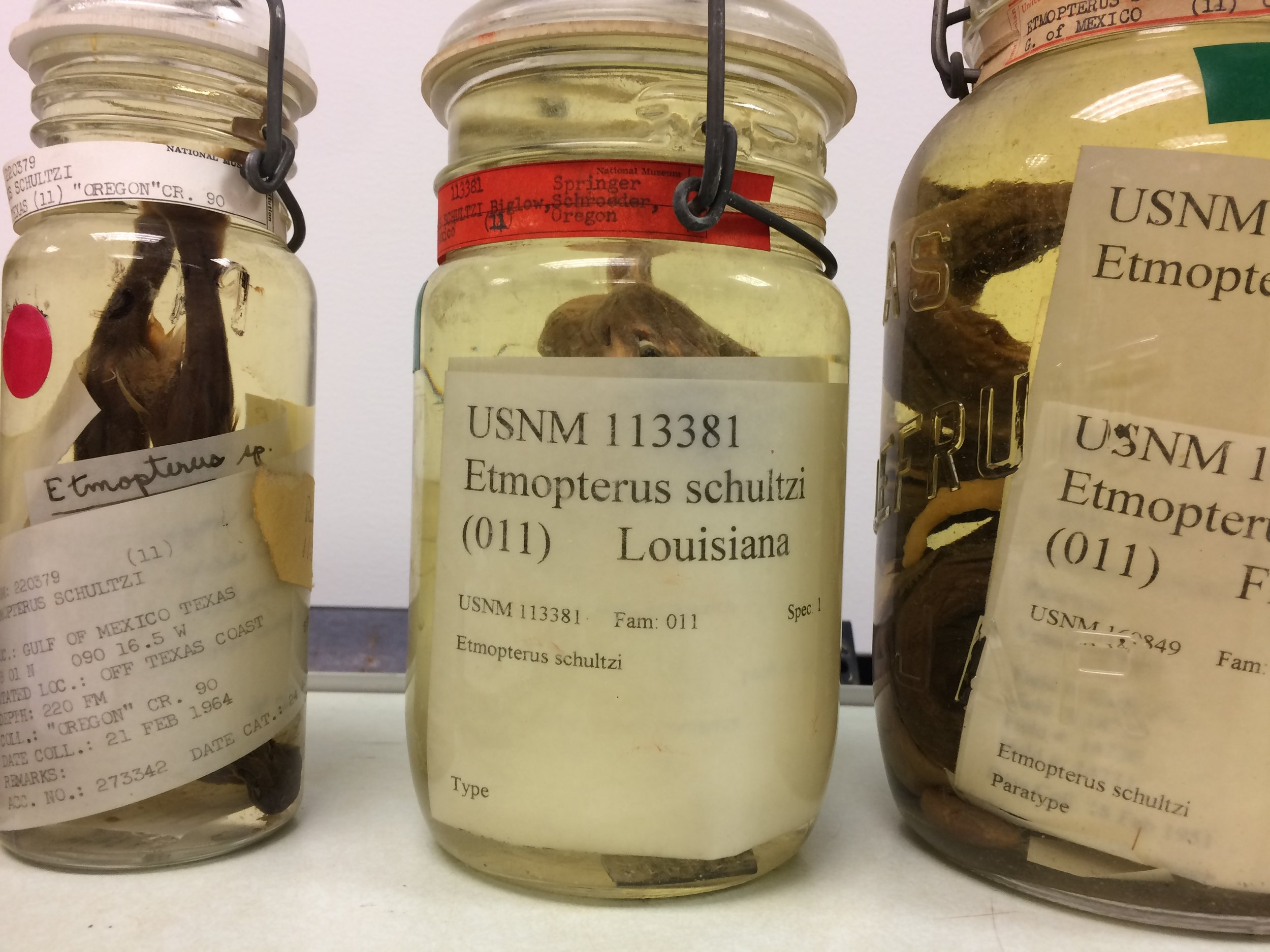 Specimens at NMNH.Photograph by Brandon Ballengée.