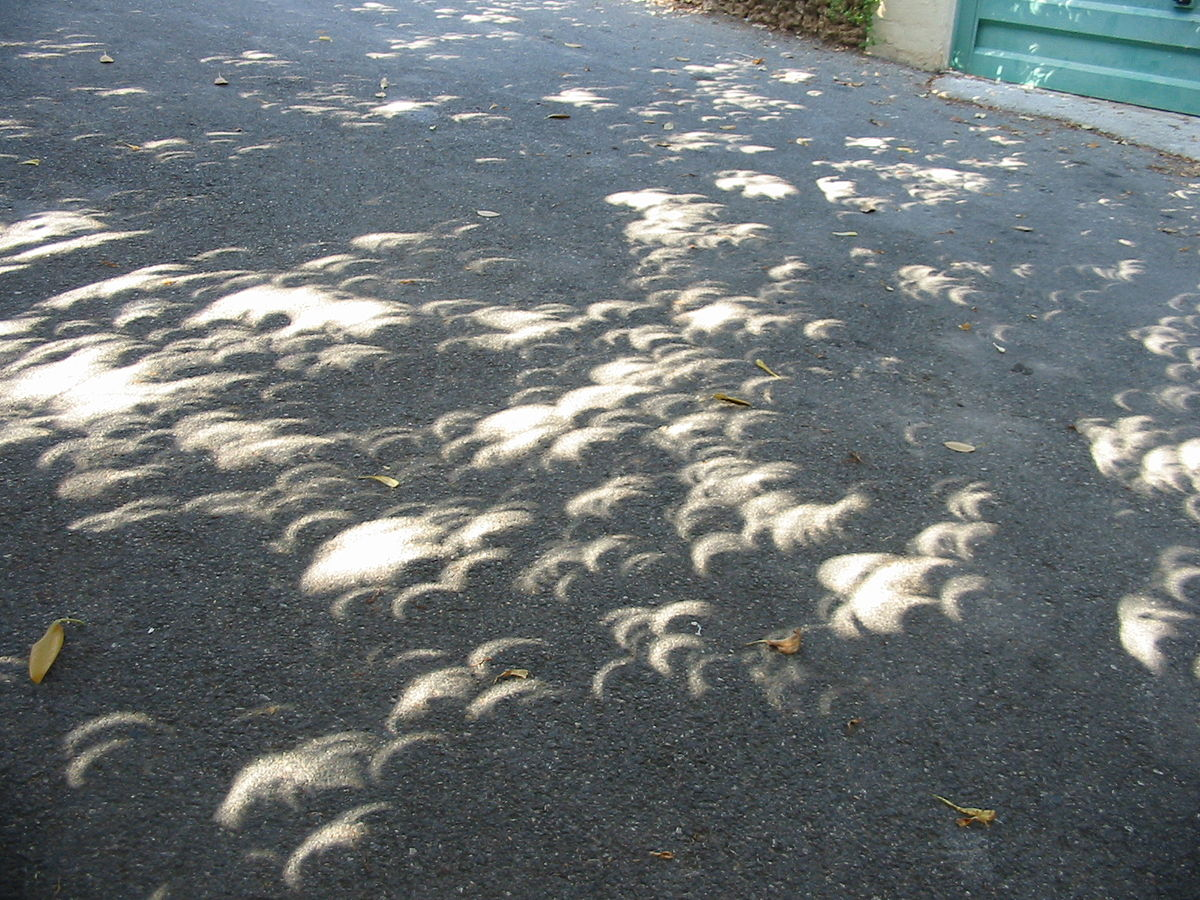 Holes in the leaf canopy project images of a  solar eclipse on the ground. Image via Wikimedia Commons, CC, Ellywa