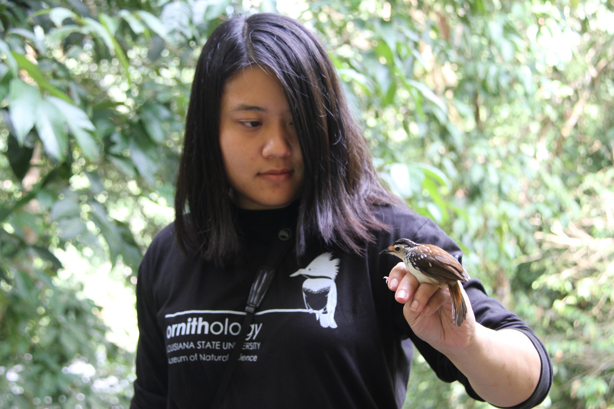 Vivien with a bird she collected in Borneo, a  Kenopia striata s triped wren-babbler. Photo by Lawrence Insol.