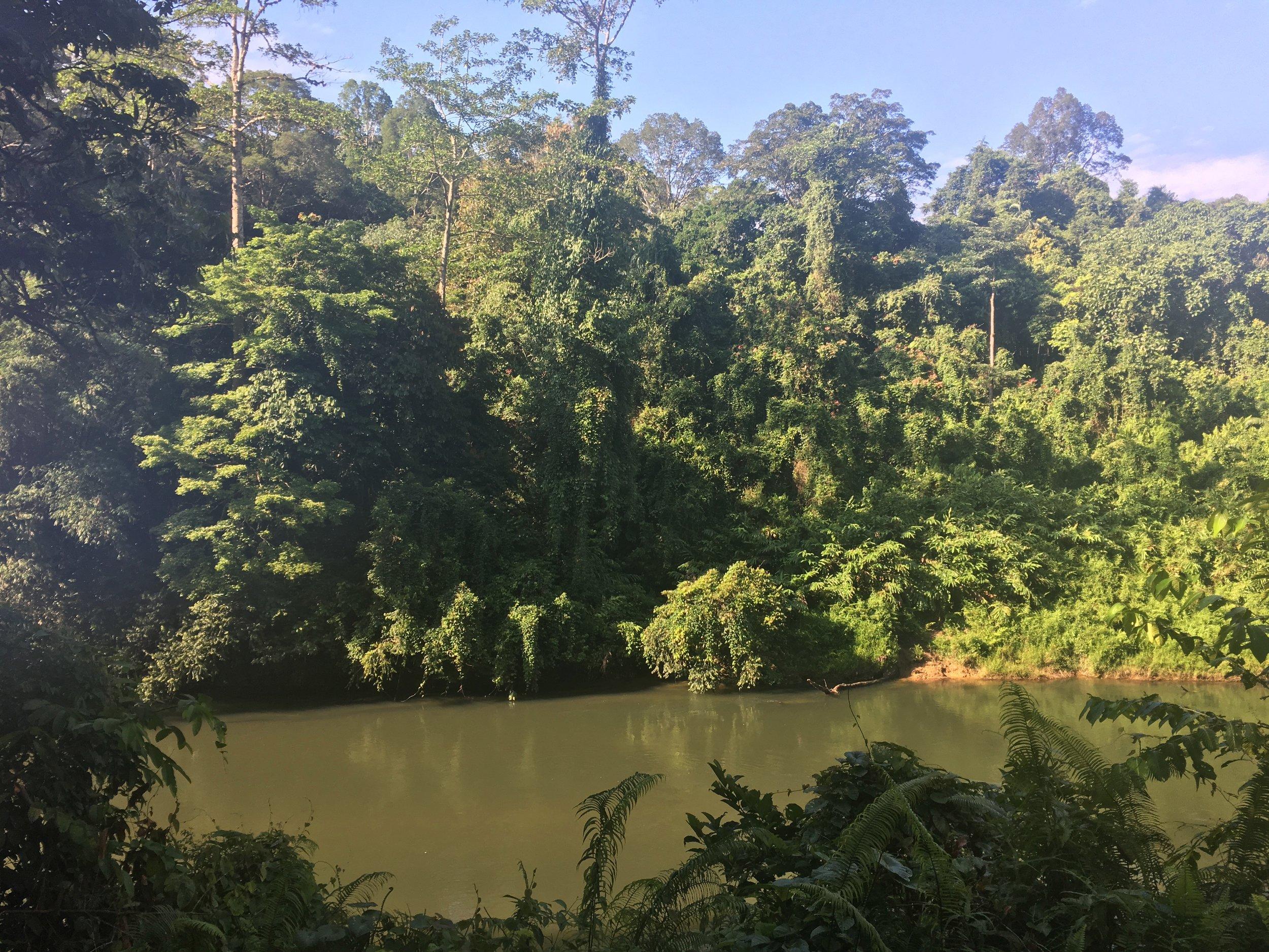Lanjak Entimau Wildlife Sanctuary in Sarawak, Borneo.